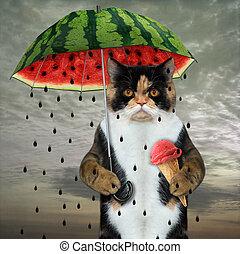 Cat under watermelon umbrella