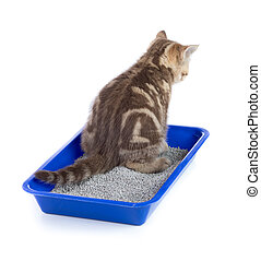 cat urinating in toilet tray box with litter rear view isolated