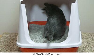 Cat using closed litter box