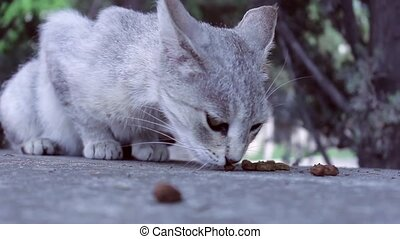 cat vs. Ants