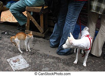 Cat vs Dog - This is a offbit pic of Cat and Dog Fighting ...