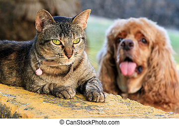 Cat vs stupid dog - Typical image of a relaxing cat with a ...