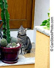 Cat waiting in front of the door