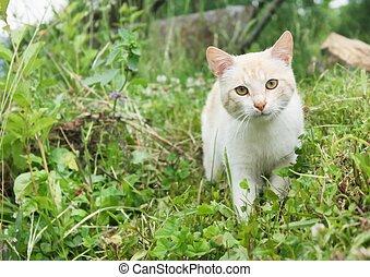 Cat walking in the gras