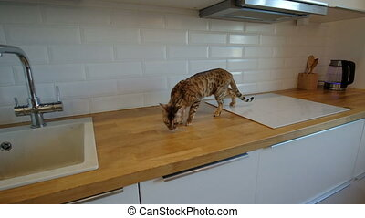 Cat walking on kitchen working surface in slow motion.