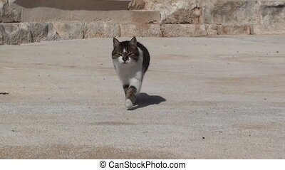 Cat walking on stage and mewing - Cat walking on...