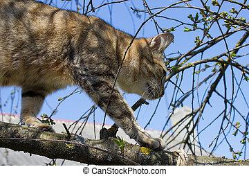Cat walking on tree