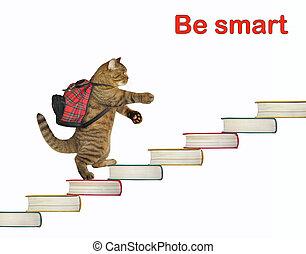 Cat walking toward success 2