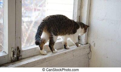 Cat walks on old narrow window sill