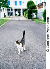 Cat walks on the asphalt against the background of a large building, trees and bushes