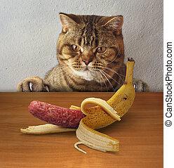 Cat wants to eat banana 2