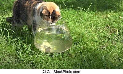 cat watch closely glass aquarium with fish in green garden. 4K