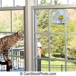 Bengal kitten watching chickadee bird on birdfeeder through window from chair
