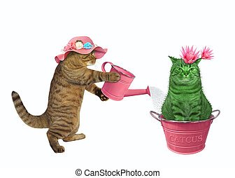 Cat watering cactus in metal pot 2