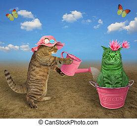 Cat watering cactus in metal pot 3