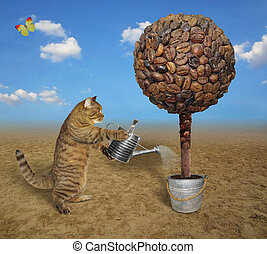 Cat watering coffee tree 2