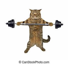 Cat weightlifter 1