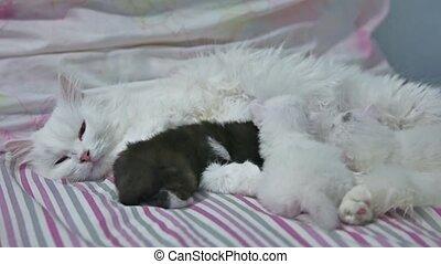 cat white and kitten love nice. pets newborn the kitten -...
