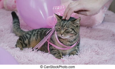 cat with a bow on the bed
