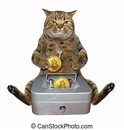 Cat with a box for bitcoins