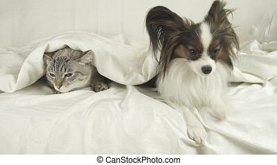 Cat with a dog lies under a blanket, dog jumps off the bed...