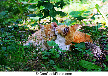 Cat and kitten laying in tall, thick grass.