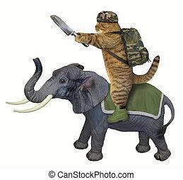 Cat with a knife on an elephant