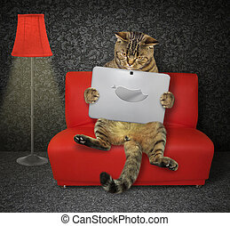 Cat with a laptop on the red couch