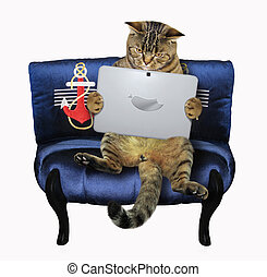 Cat with a laptop on the sofa