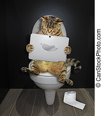 Cat with a laptop on the toilet