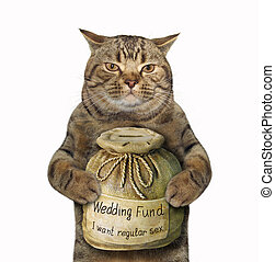 Cat with a money box for wedding