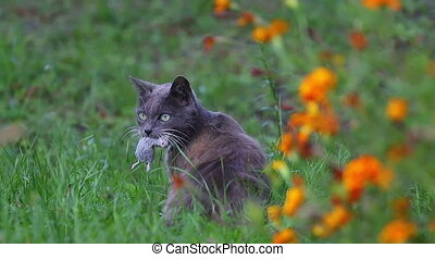 cat with a mouse in its teeth in autumn colors, Pets