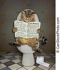 Cat with a newspaper on the wc 2