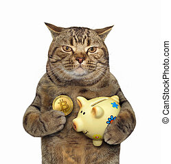 Cat with a piggy bank for bitcoins