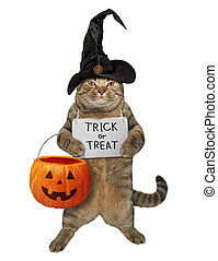 Cat with a pumpkin bag and a sign