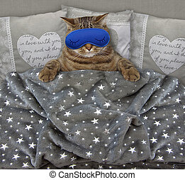 Cat with a sleep mask in the bed