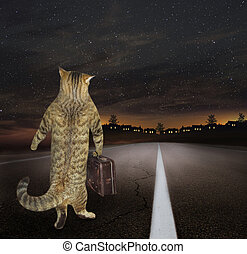 Cat with a suitcase