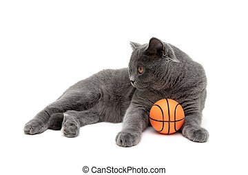 cat with an orange ball on a white background