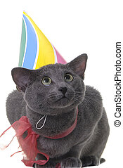 cat with birday hat and ribbon