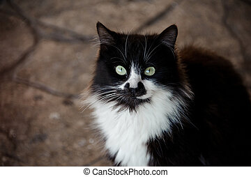 Cat with black and white fur in animal shelter