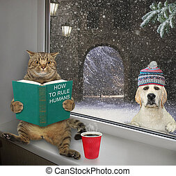 Cat with book sits on windowsill 2