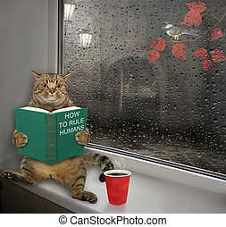 Cat with book sits on windowsill