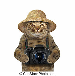 Cat with camera 2