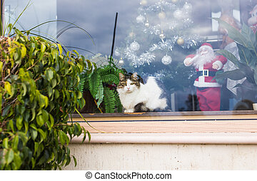 Cat with christmas tree and santa claus figure behind a store window in the city