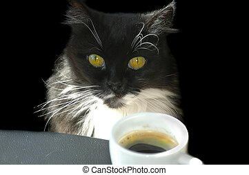 Cat with Coffee