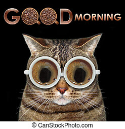 Cat with coffee glasses 3