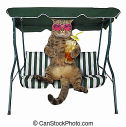 Cat with cold tea is on a swing bench
