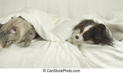 Cat with dog crawls out from under the blankets and jumps...