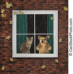 Cat with dog look out the window 2