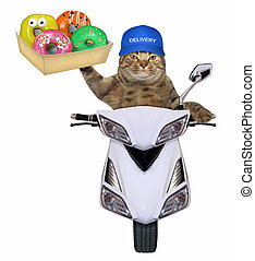 Cat with donuts on the scooter